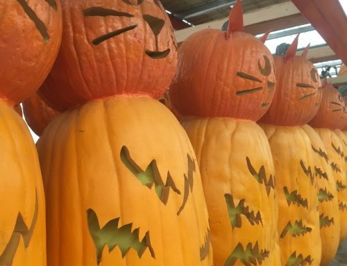 Behind the Scenes: More Pumpkins = More Storage Solutions
