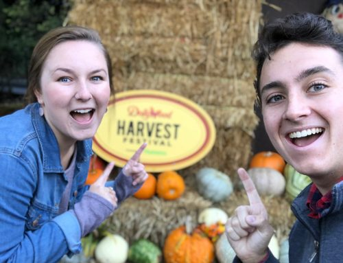 "Fall ""Instagrammable"" Spots of Dollywood"