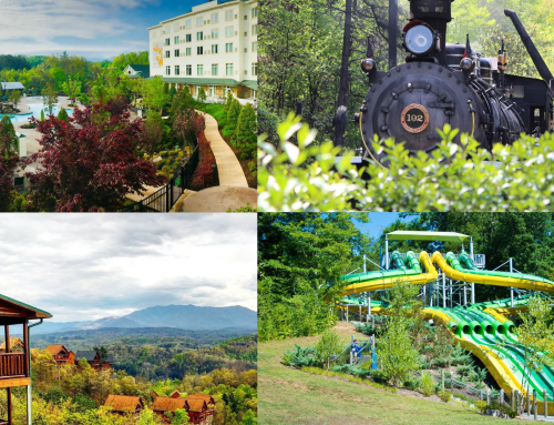 Tripadvisor Ranks Dollywood One of the Best in the World