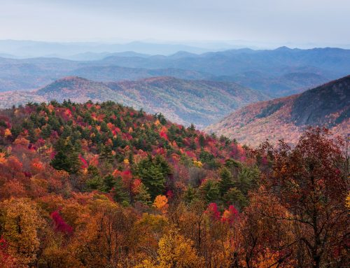 Where, When and How to See the Best Fall Colors in the Smokies