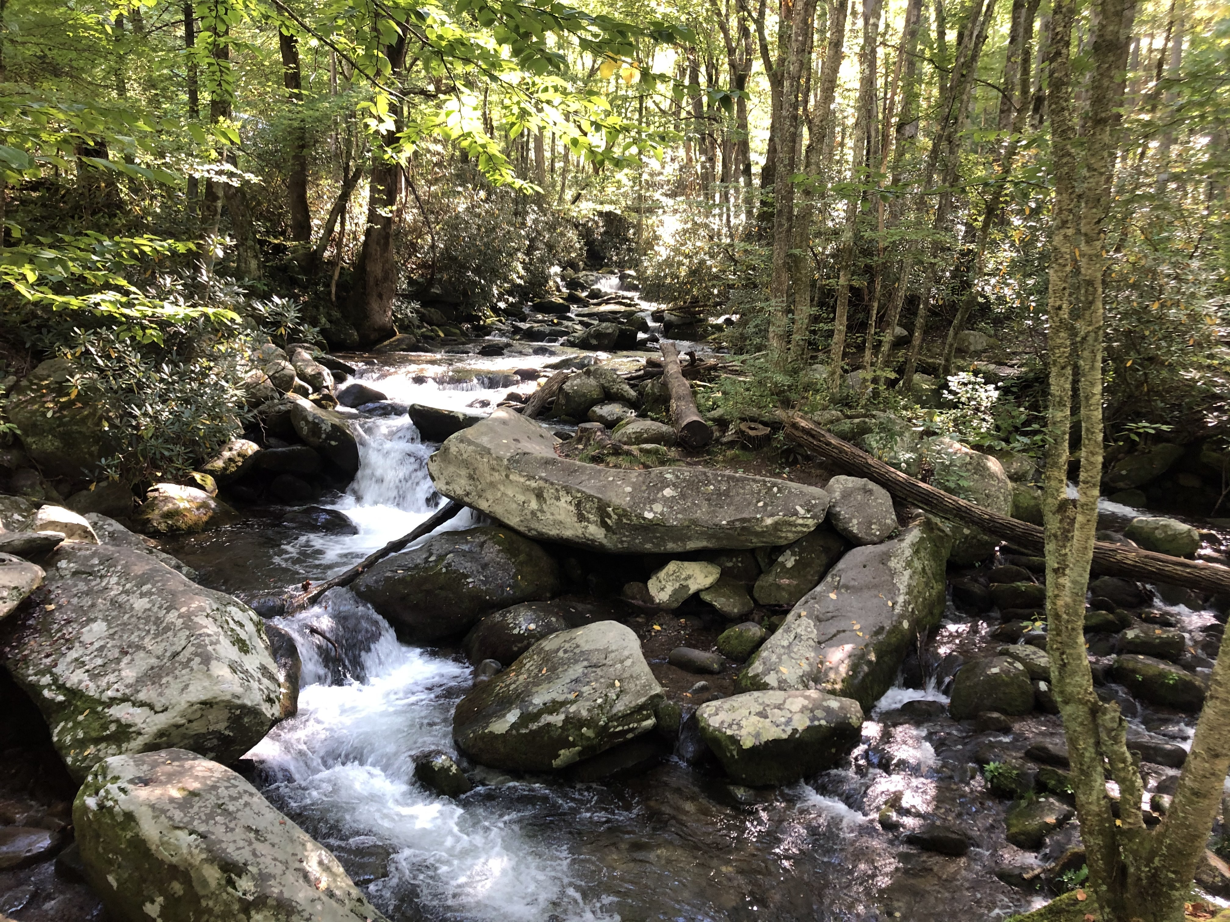 A view along Roaring Fork Motor Nature Trail