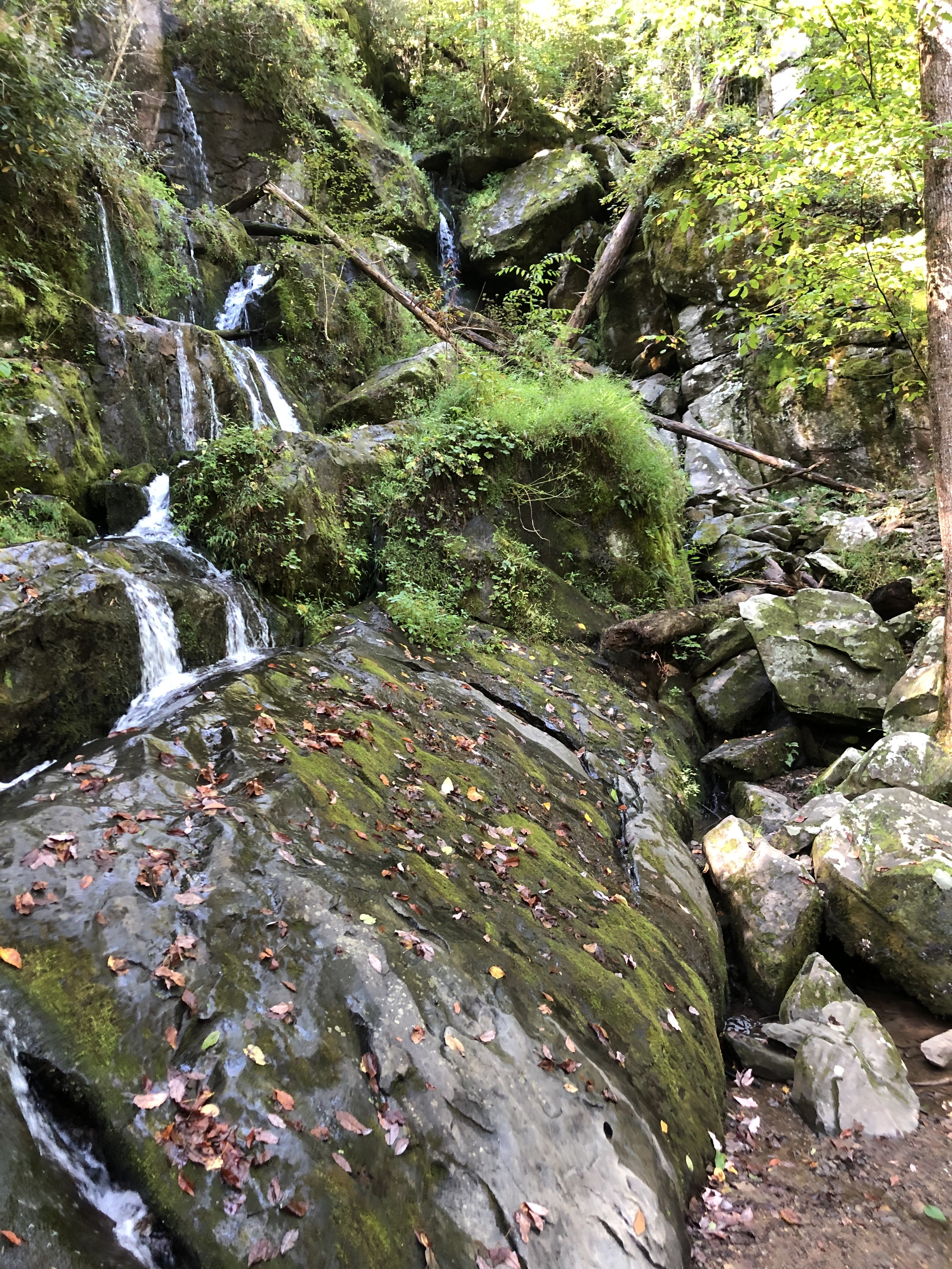 Place of A Thousand Drips on Roaring Fork Motor Nature Trail